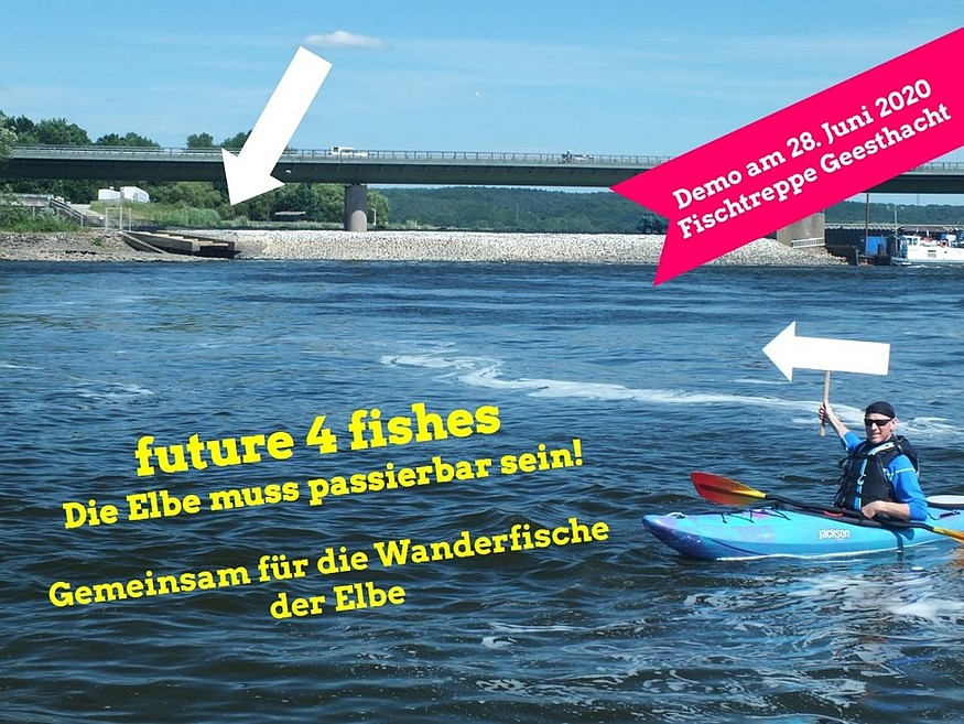 future4fishes